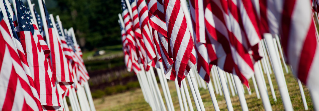 rows of small american flags planted together in grass