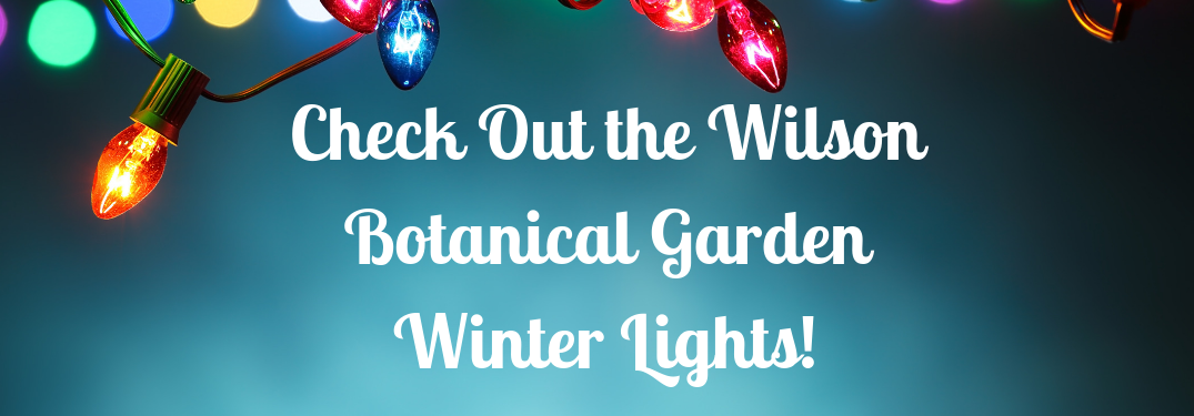 "blue background with christmas lights with white text over it that says ""check out the wilson botanical garden winter lights"""
