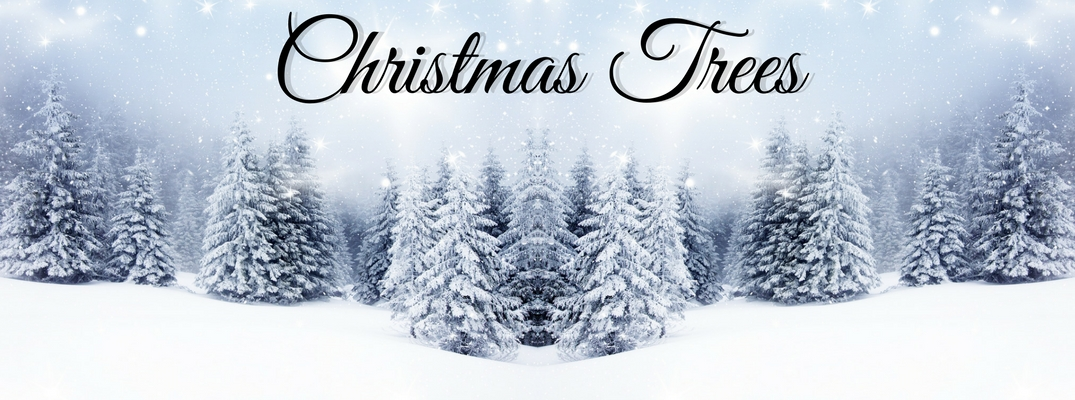 Christmas Trees Banner with Snowy Forest Background