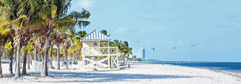 beach hut, palm trees
