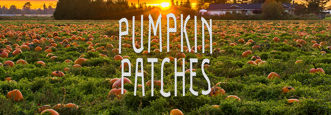 pumpkin patches written in white against a pumpkin patch background