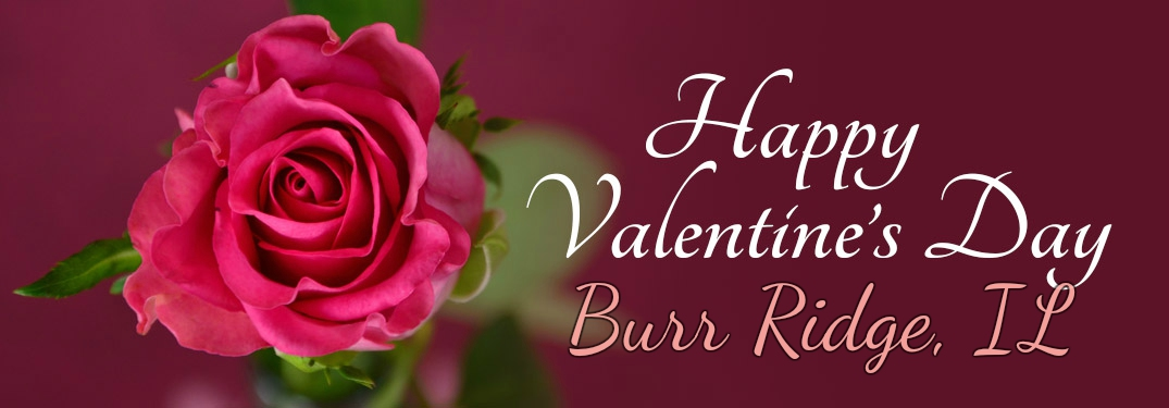 Happy Valentine's Day Burr Ridge with a single rose