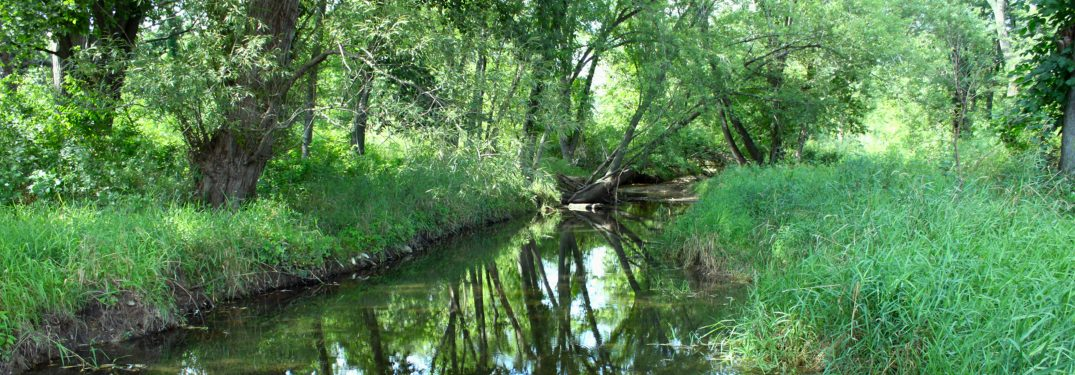 creek surrounded by grass and trees