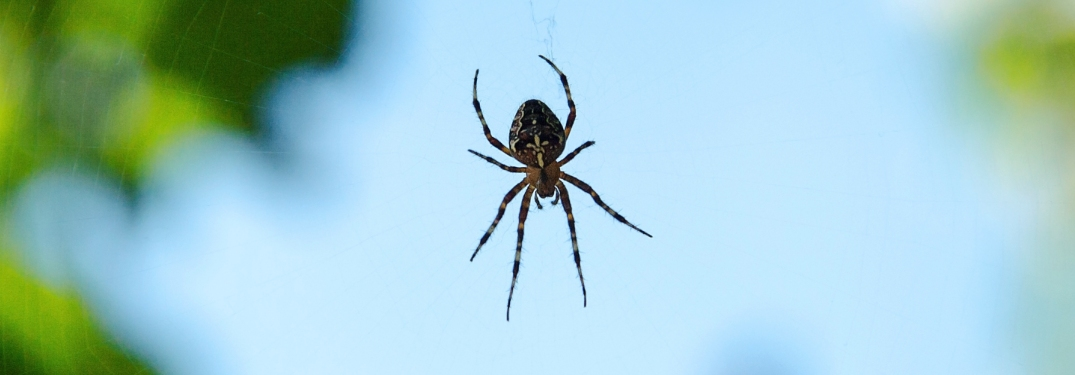 spider floating on a web