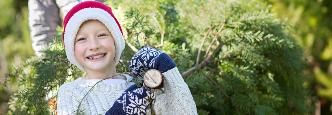 young boy in christmas clothes carrying cut tree behind him