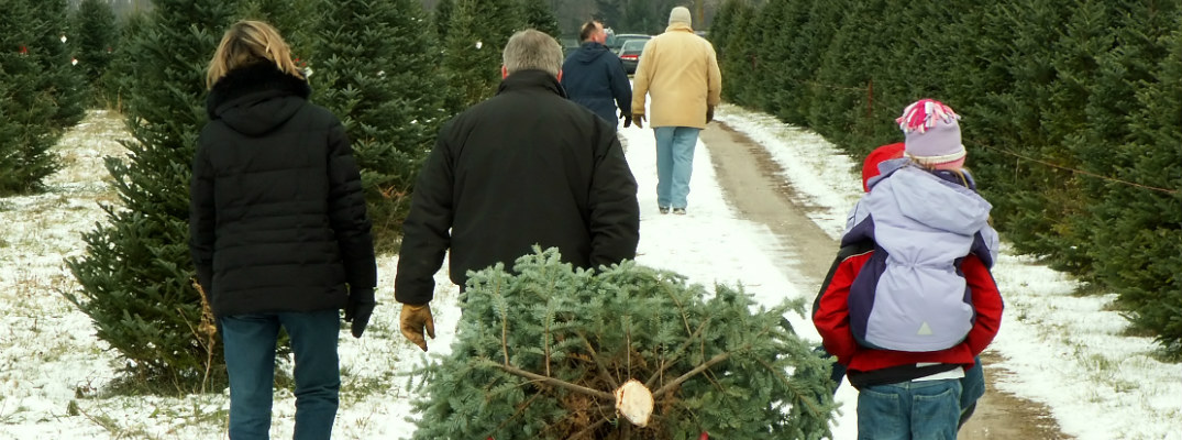 family carrying cut christmas tree outside away