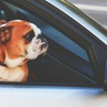 dog-with-glasses-in-car_b - Alamo Toyota