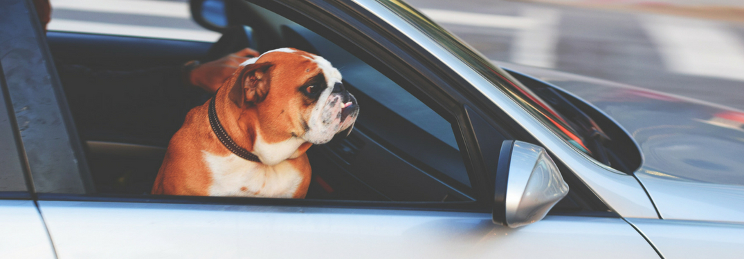 Is it Illegal to Drive with Your Dog in Texas?