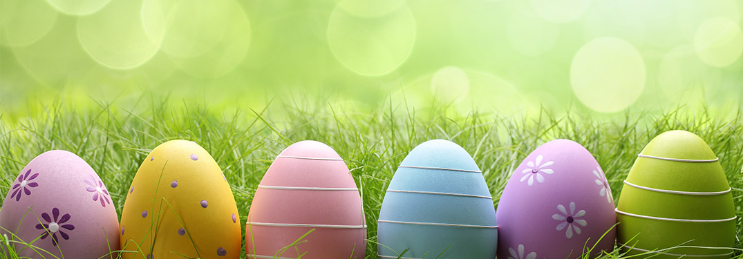 Easter eggs lined up on green background