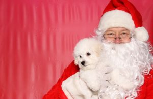 Santa Clause holding a puppy
