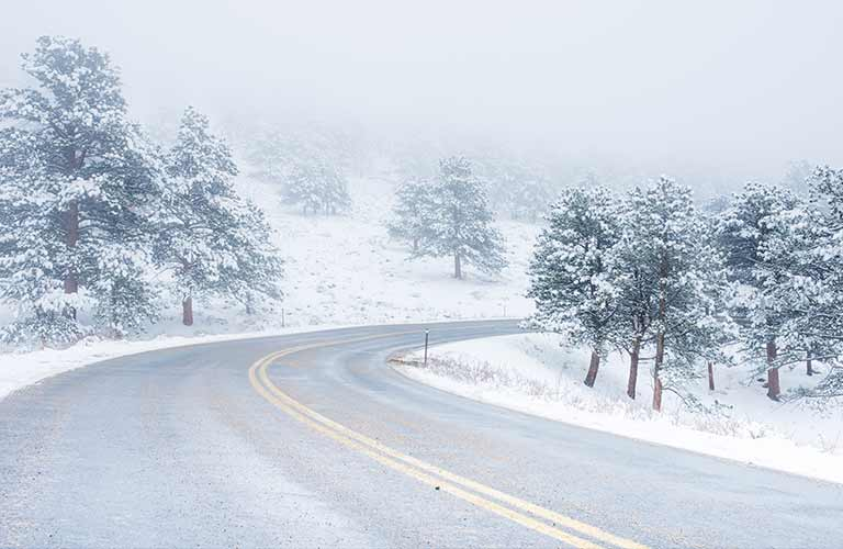 snowy winter road by pine trees