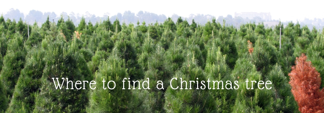 where to find a christmas tree