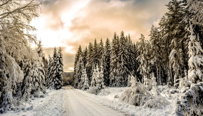 A forested road in winter