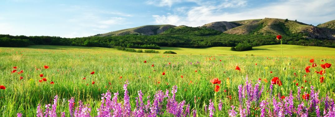 A grassy field with flowers blooming