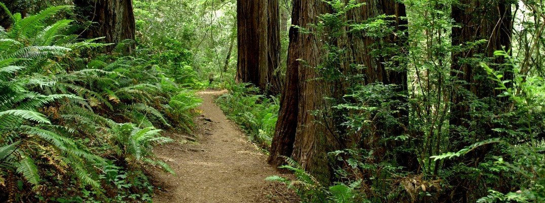 Hiking trail through Redwoods State Forest
