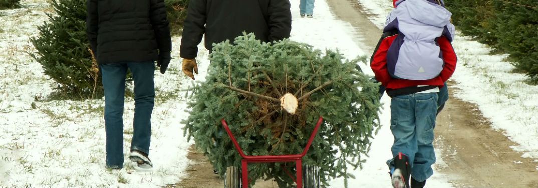 Christmas Tree Farms in Delaware with image of a family pulling a Christmas tree on a cart out of the field