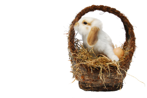 A fluffy white bunny with brown ears pokes out of a handwoven basket.