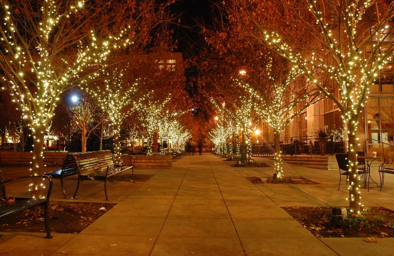 Trees lit up with lights