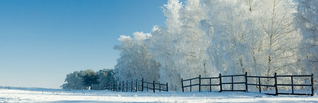 line of trees along a fence in a field during the winter