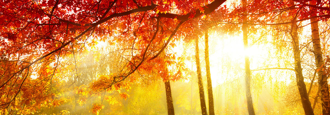 Where can we see the autumn colors?