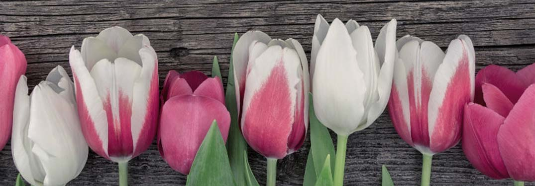 Where to Get Mother's Day Flowers in Chicago