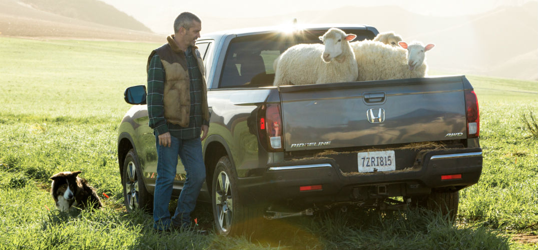 What song are the sheep singing in the Honda Super Bowl commercial?
