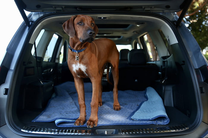 The Roomy Kia Telluride is Perfect for Pet Proofing