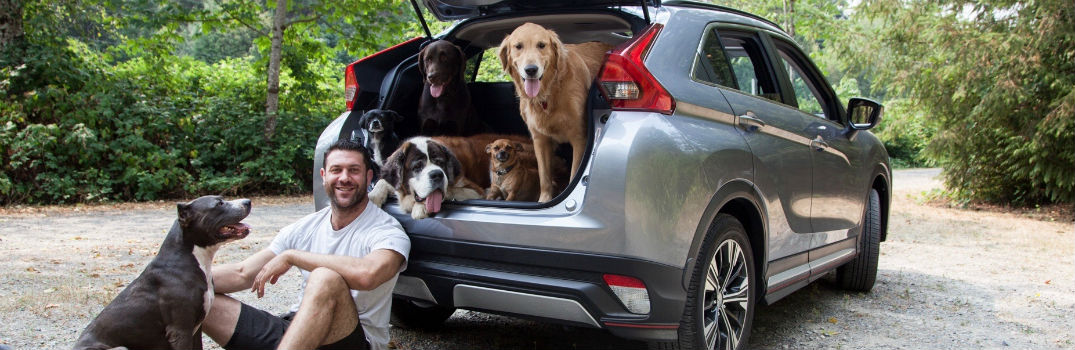 Lee Asher and his Six Dogs Hanging out in their all-new 2018 Mitsubishi Eclipse Cross
