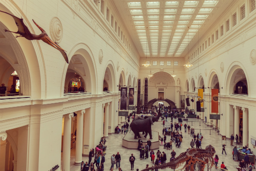 Interior of a Chicago museum with dinosaurs and many visitors.