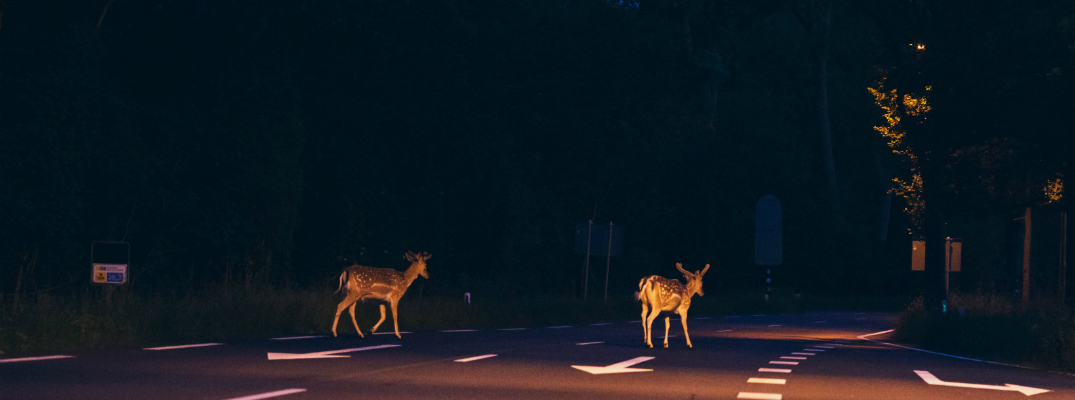 Contact the Parks Body Shop to Fix Your Deer Collision Damage