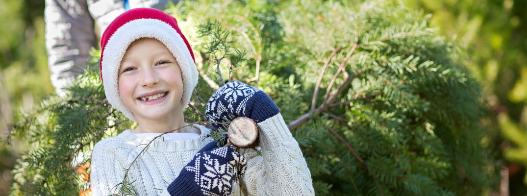 A young child carrying a Christmas tree