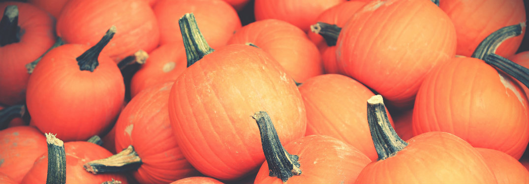 close up of orange mini pumpkins