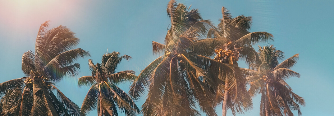 Palm trees on a bright summer day