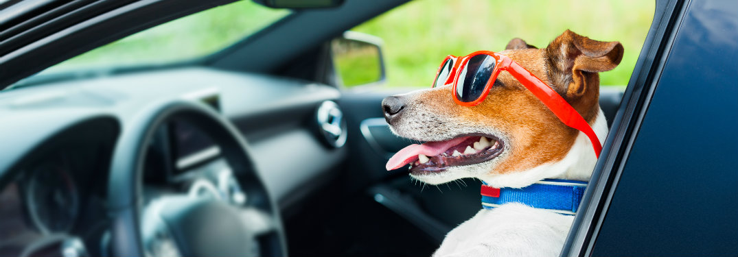 A dog with sunglasses behind a car's steering wheel
