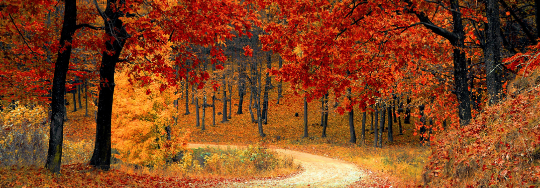 A forest path in the fall