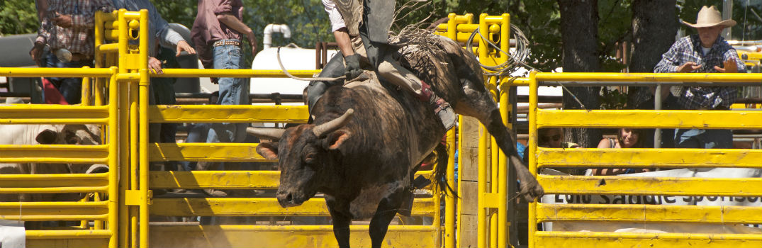 Man Riding a Bull at the Rodeo