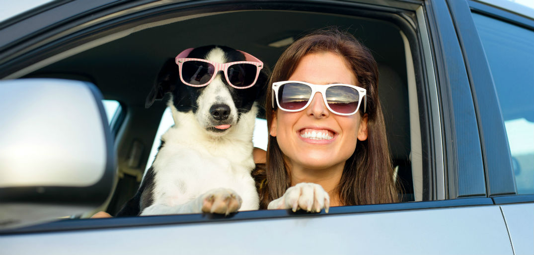 What pet travel carriers and harnesses are crash tested?