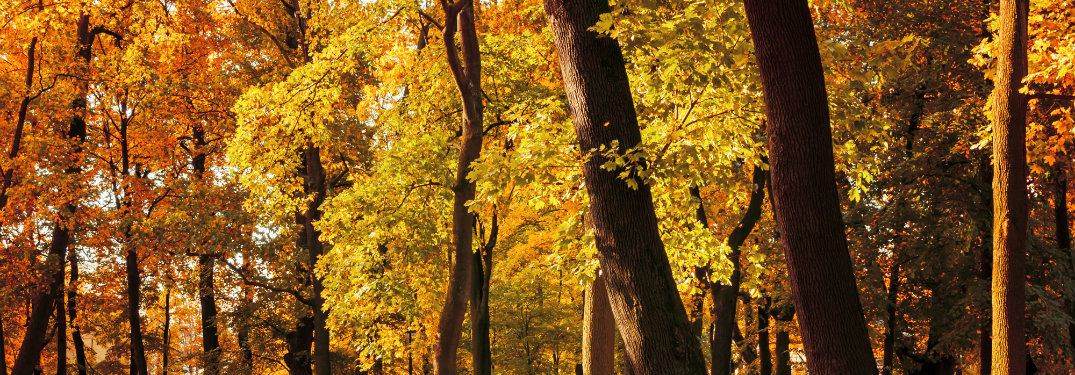 forest of trees with fall colors