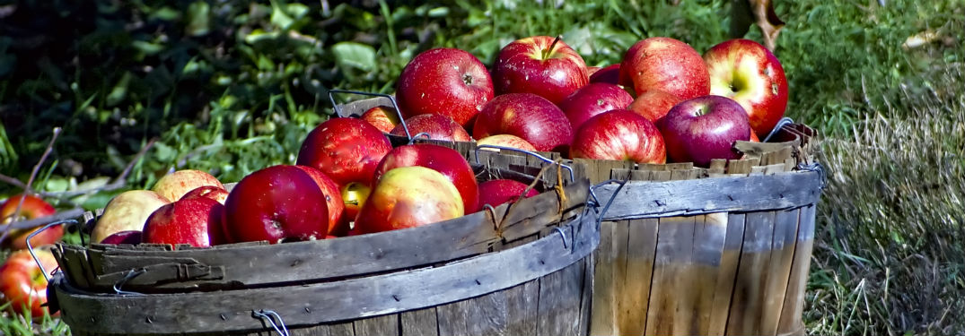 Where Are the Best Apple Orchards Near Janesville WI
