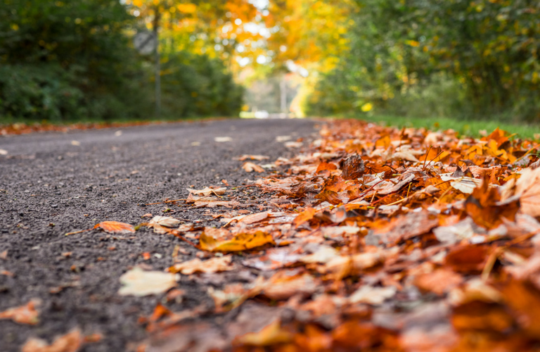 Autumn leaves fall on roadway