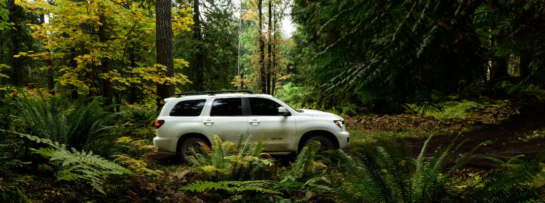 White 2020 Toyota Sequoia Driving through forest