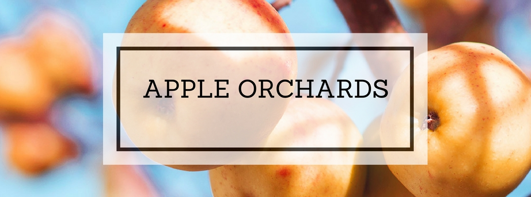 Apple Orchards and Farms near Birmingham AL