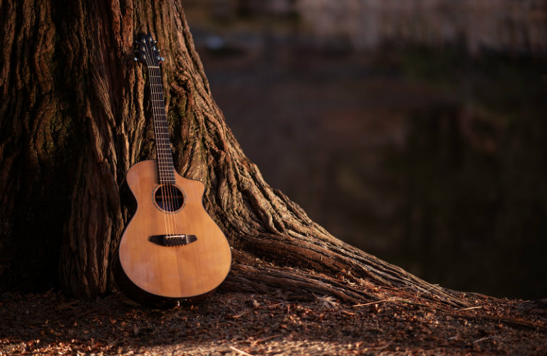 acoustic guitar leaning on tree