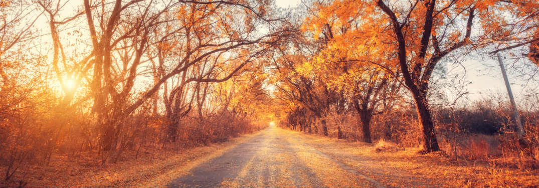 Forested road at autumn.