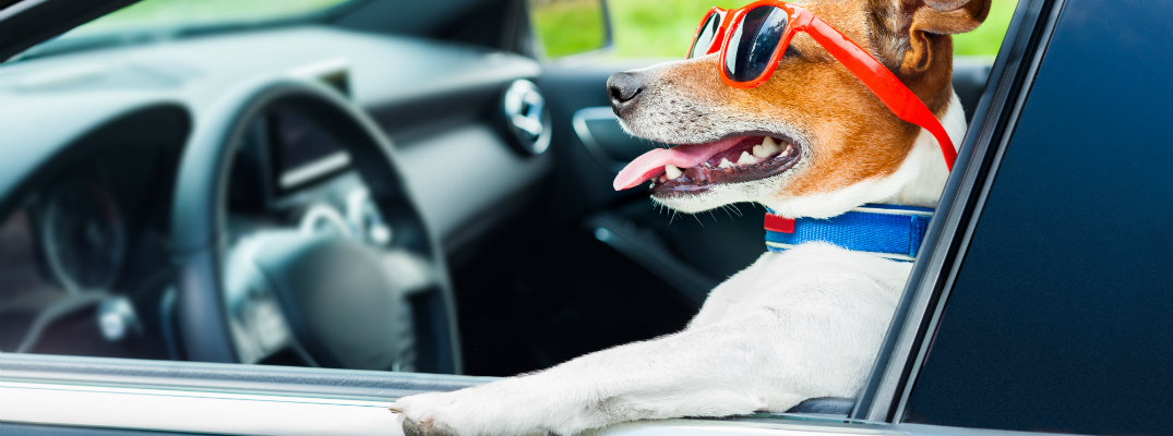 How to Keep Pets Cool in the Car for Traveling in the Summer
