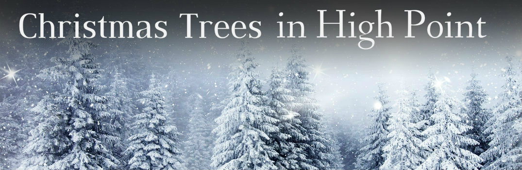 Cut Your Own Christmas Trees In High Point Nc