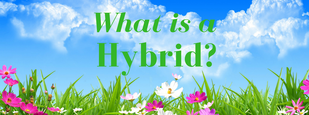 what is a hybrid car_o