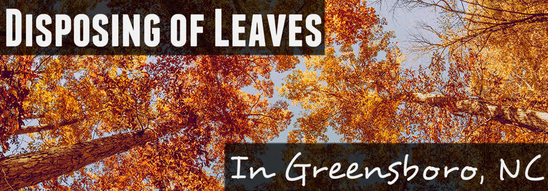 Disposing of leaves in Greensboro