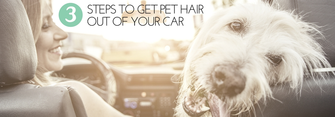 How to get pet hair out of cloth car seats