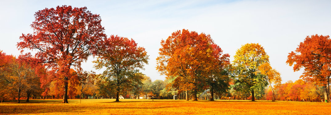 beautiful-fall-colored-trees-in-an-open-park